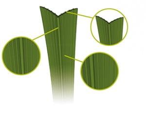 Royal Grass kunstgras